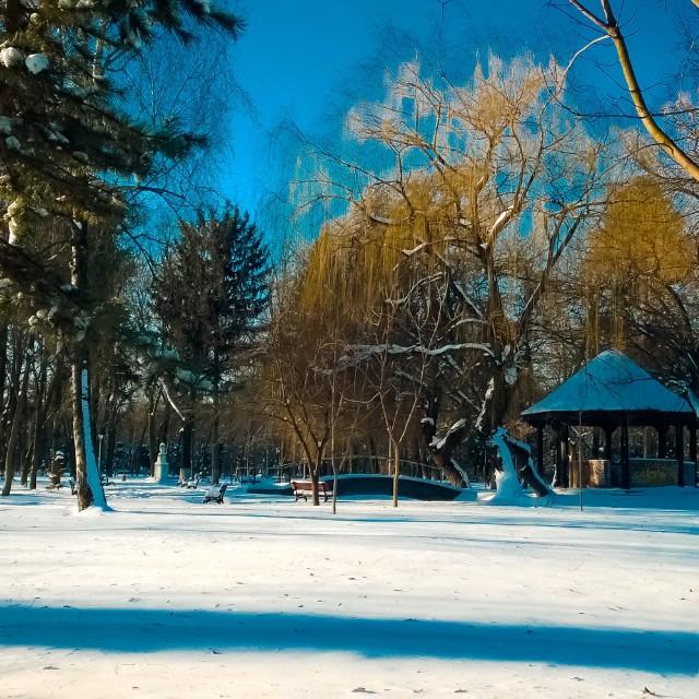 iarna-bacau